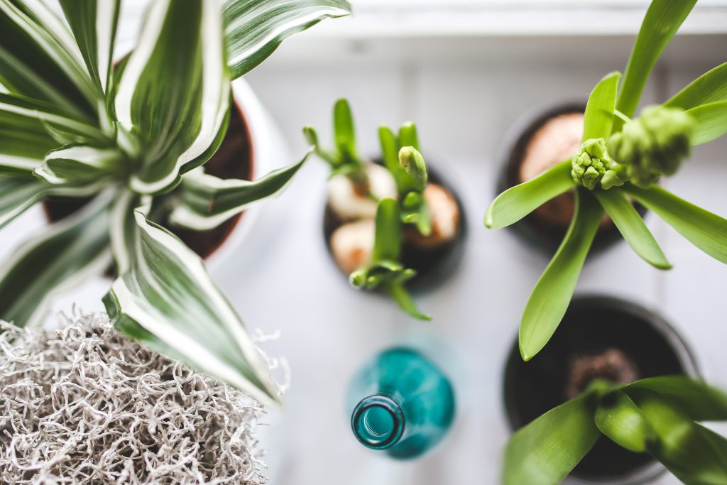 gift ideas for plant lovers